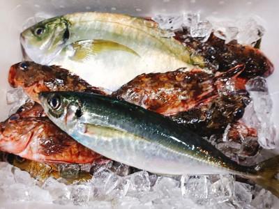 新鮮な佐伯の地魚たち